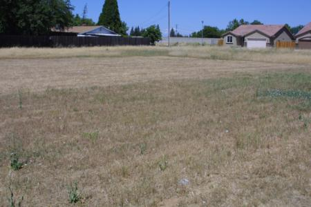 The site mowed and sprayed, 2010